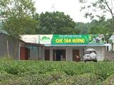 HTX Chè Tân Hương